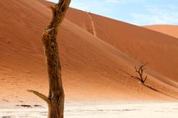Duet (Namibia, Deadvlei)