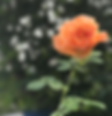 Capture d'écran 2019-09-17 à 14.36.36.pn