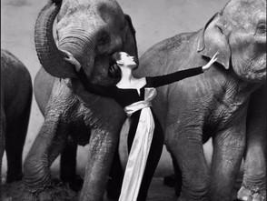 Dovima with the Elephants in Paris