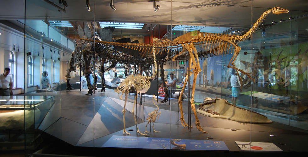 los angeles county museum of natural history featuring the dinosaur hall exhibit fabrication and artifacts