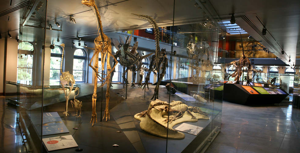 los angeles county museum of natural history featuring the dinosaur hall exhibit with fossil