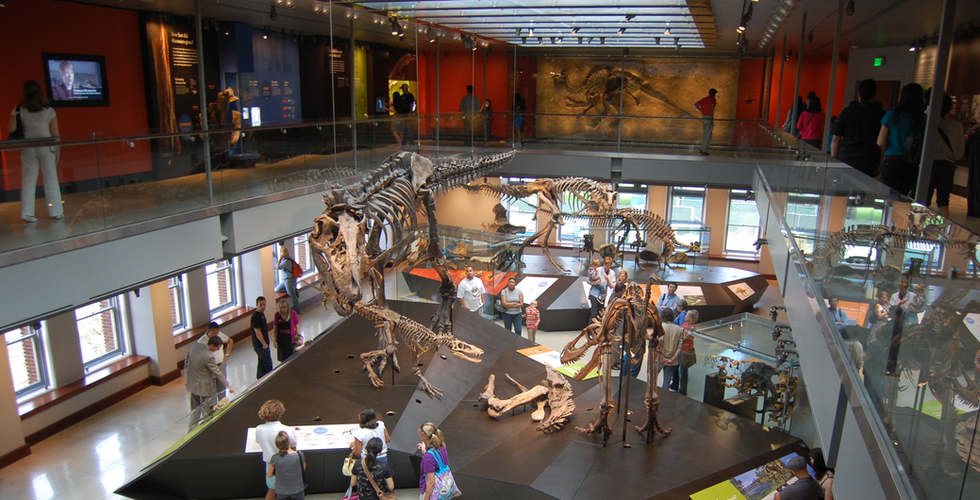 los angeles county museum of natural history photo looking down in the dinorsaur hall