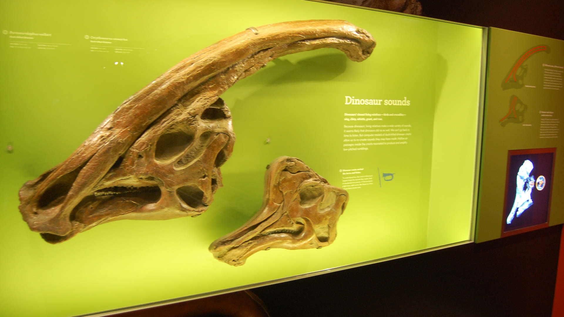 los angeles county museum of natural history featuring the dinosaur hall exhibit graphic and custom artifact mounting