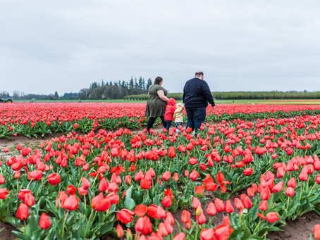Engagement Session ~ Katie & Allen ~ Wooden Shoe Tulip Farm, Woodburn OR