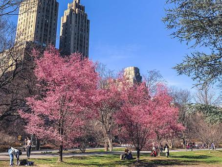 曼哈顿房地产市场回暖