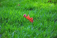 Fall Grass 1.jpg