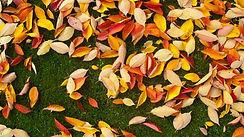 Fall Grass.jpg