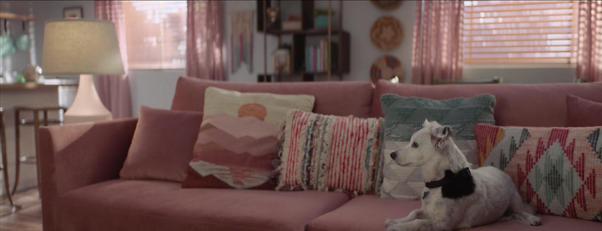 dog living room copy.png