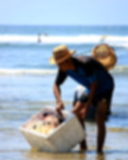beach-fisherman-man-2182206.jpg