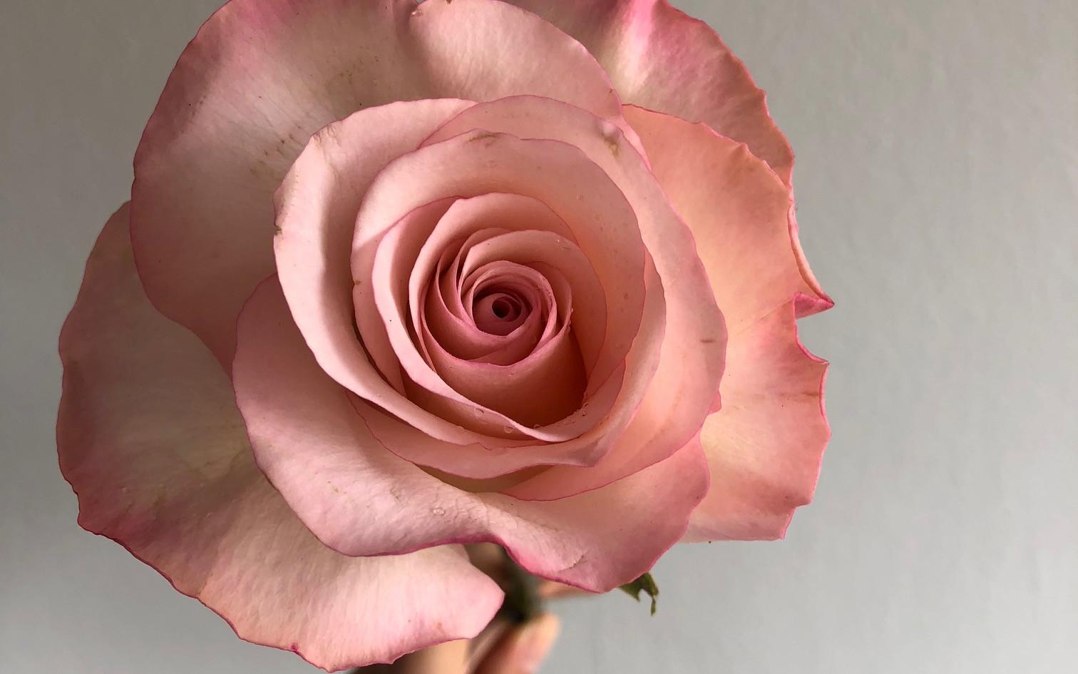 flores (6).jpg