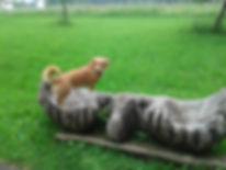 Handycap Hundetraining-Windhagen