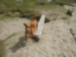 Hundeschule in Windhagen