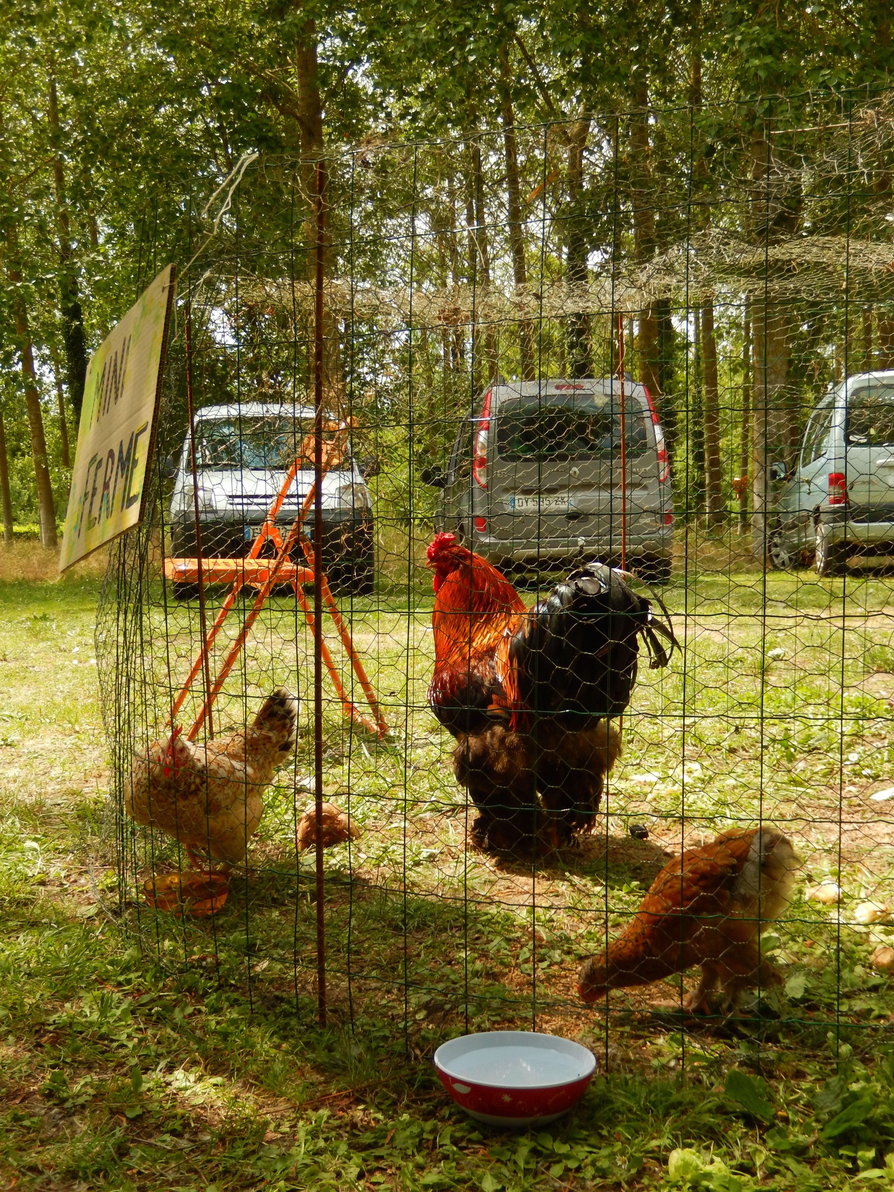 Mini ferme - Fête des fouées 2017