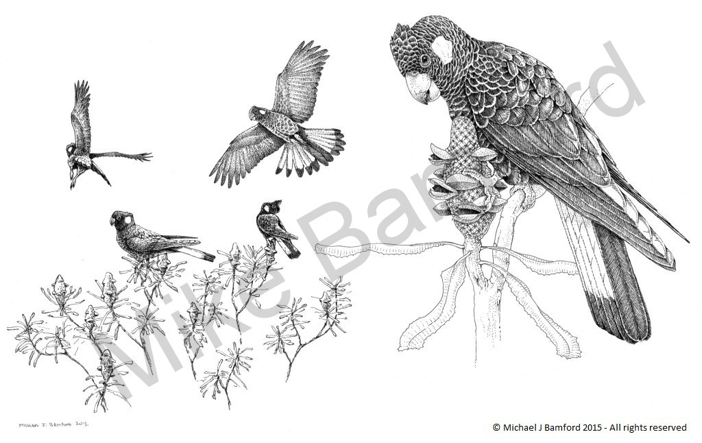 Carnaby's Cockatoos - M. J. Bamford
