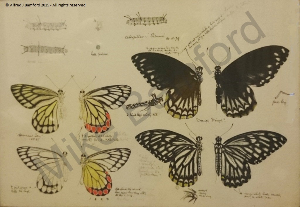 Butterflies - A. J. Bamford