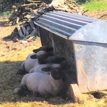 Sunbathing Teddies