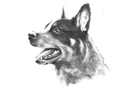 Аудиорассказ на татарском языке о собачке Актуш