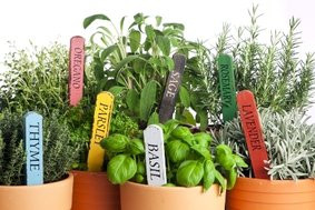 Tell Us About Your Favorite Herb