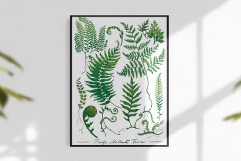 Sarah Clement - Pacific Northwest Ferns Print