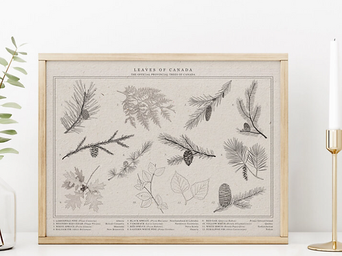 Leaves of Canada - Leaves of Canada Print