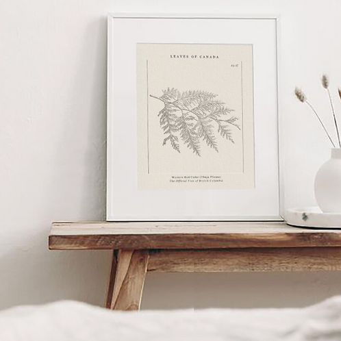 Leaves of Canada - The Western Red Cedar of British Columbia Print