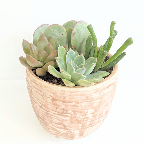 Radical Wondering - Taupe Plant Pot with Succulent Garden