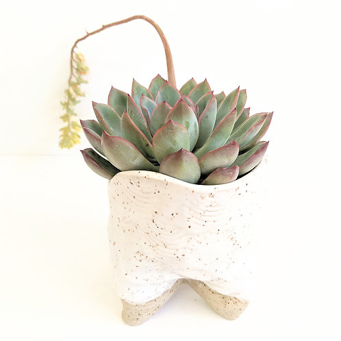 Radical Wondering - Speckled Pot with Succulent