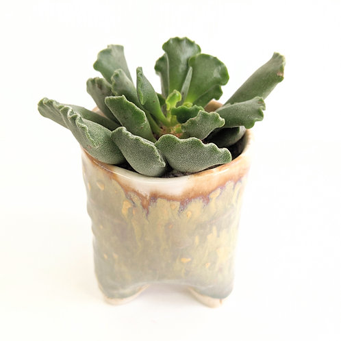 Radical Wondering - Handmade Plant Pot with Succulent