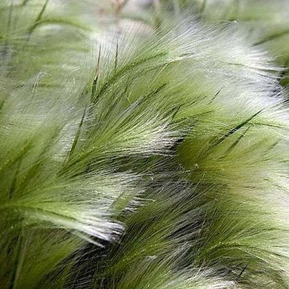 Les cheveux d'anges
