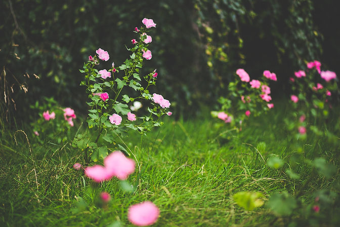Canva - Pink Petal Flowers.jpg