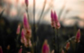 Canva - Pink Petaled Flowers.jpg