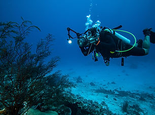 Fotografía submarina
