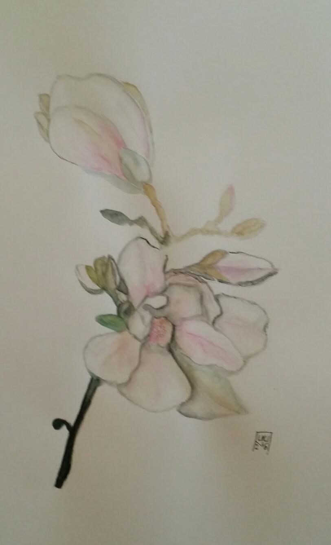 LML Magnolia