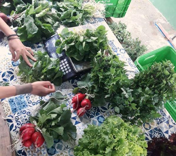 Florestinha - Alimentos Organicos - Alto