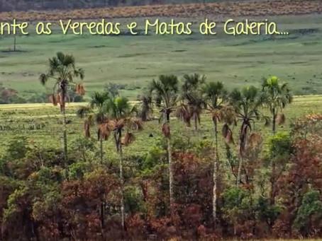 Conheça o trabalho da Associação Cerrado de Pé que coleta sementes de espécies nativas do Cerrado e