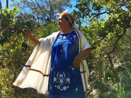 Curandeira Mexicana, Doña Leoba vem a Alto Paraíso ministrar imersão de México Milenar