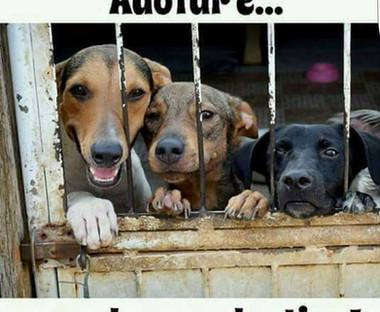 Salvar ONg Alto Paraíso 2.jpg