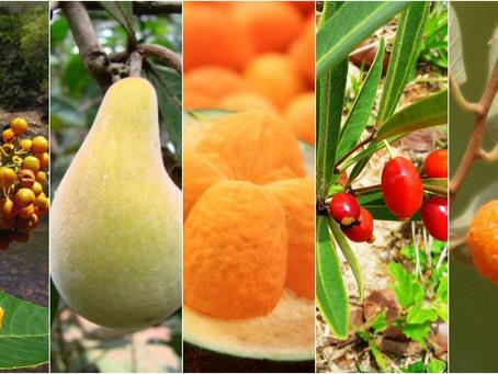 Lançada plataforma sobre Biodiversidade e nutrição, com lista de plantas nativas do Brasil com usos
