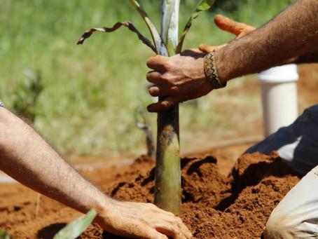 I Encontro de agroecologia da Chapada dos Veadeiros