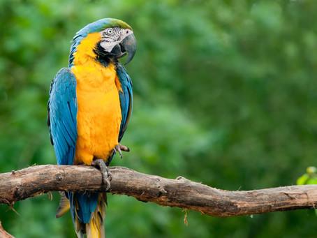 Confira algumas espécies da Fauna do Cerrado que você poderá encontrar quando visitar a Chapada dos
