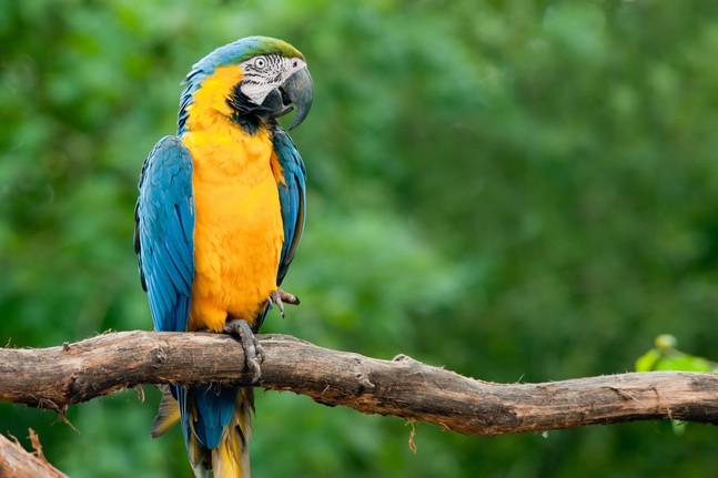 Suficiente Espécies da Fauna do Cerrado que você poderá encontrar quando vi  ME08