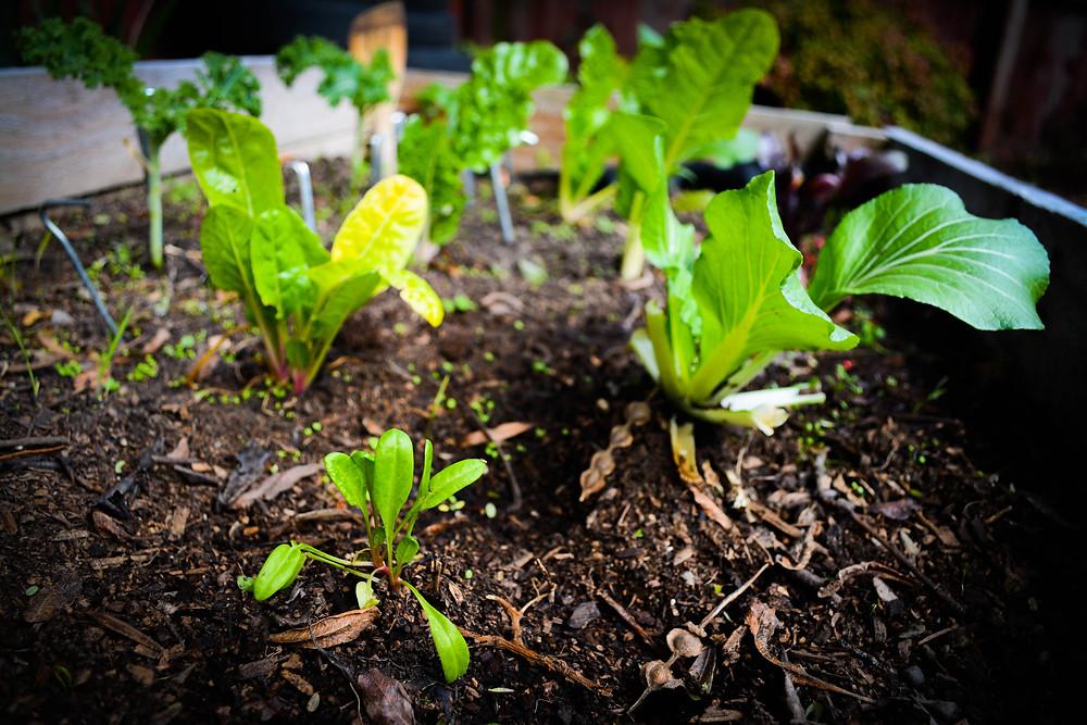 Veggie patch produce