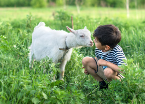"""You Have to Say, """"Ba-a-a"""" to a Little Baby Goat"""