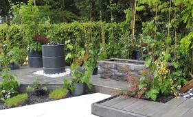 Le jardin des légumineuses