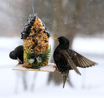 BirdFeederWinter4.jpg