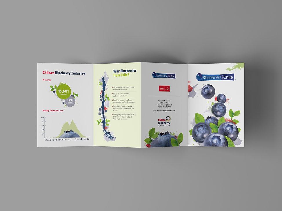 4 Fold Brochure Mockup-Recuperado(1).jpg