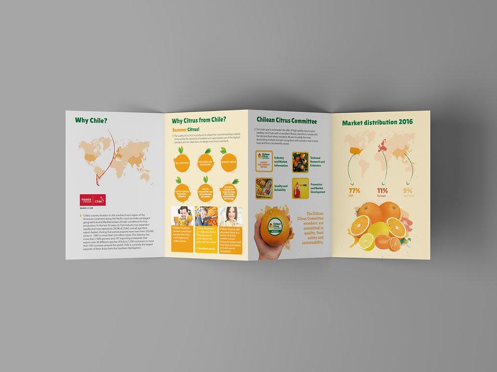 4 Fold Brochure Mockup2.jpg