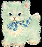 mint green cat