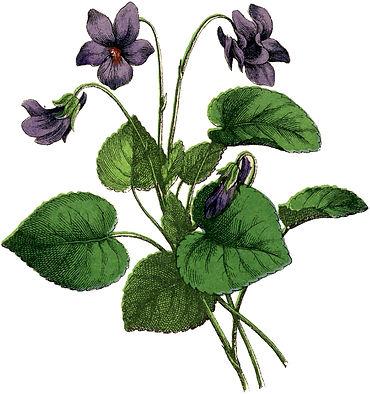 Vintage-Violets-Image-GraphicsFairy.jpg