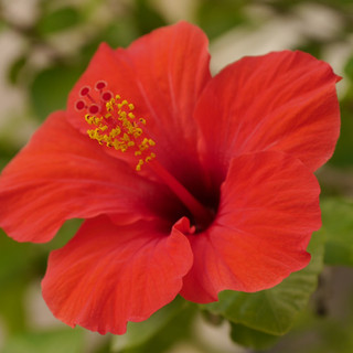 flower-3775169_1280.jpg
